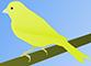 kanarienvogel.png